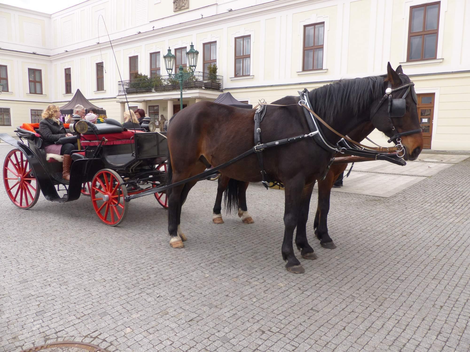 Zájemci se mohli projet kočárem zámeckými zahradami, foto: Natálie Kuzmová