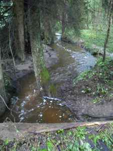 Všechny potoky byly těsně po poklesu hladin a měly stále hodně vody.