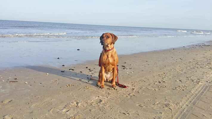 Minnie od Cykasu, poprvé u moře :-)