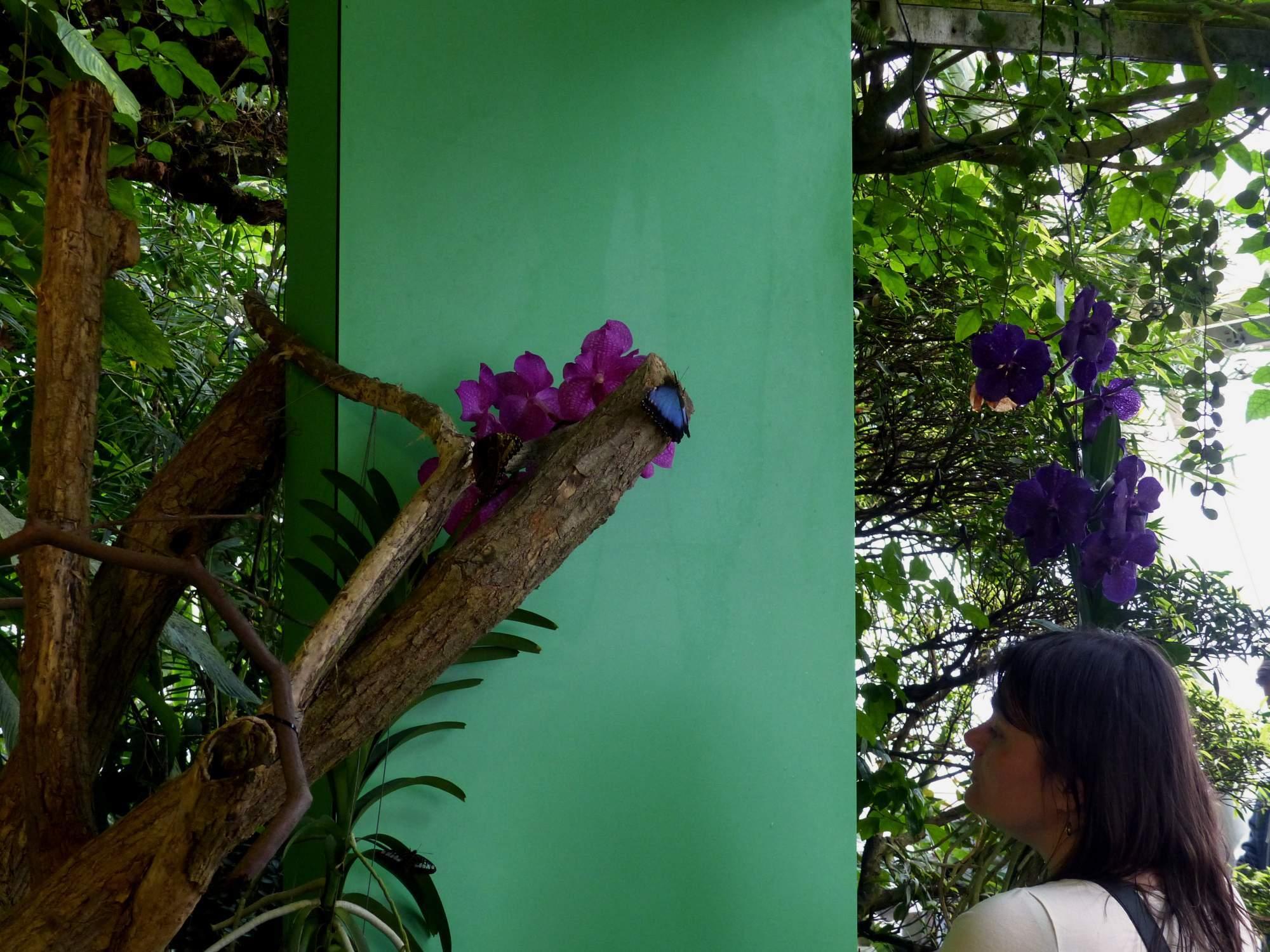 Výstava exotických motýlů autor: Simona Chlupová