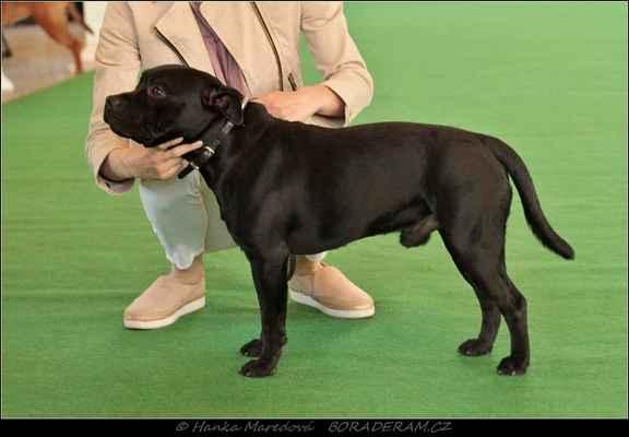 I am Wrath Domidar Dogs (Frisian Staff´s Final Countdown X Maya Stawka Wieksza niz Zycie) - Třída mladých - psi - známka: výborný 3
