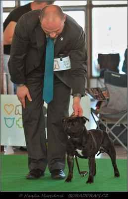 Front Runner Domidar Dogs (Breno Domidar Dogs X Beretta Domidar z Hambalek Bušín) - Třída šampionů - psi - známka: výborný 2, res. CAC
