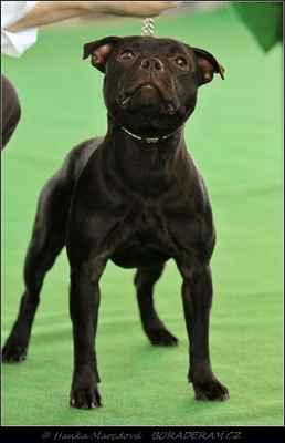 I Want It All Domidar Dogs (Frisian Staff´s Final Countdown X Maya Stawka Wieksza Niz Zycie) - Třída mladých - feny - známka: výborná 2