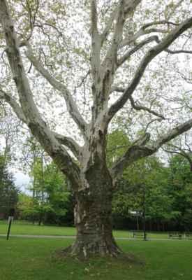 Kromě soch je tu k vidění i dost zajímavých a někdy i památných stromů.