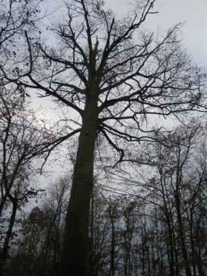 bytosti lesa